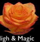 High&Magic