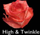 High&Twinkle