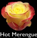 Hot-merengue